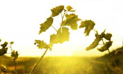 Поезд этнийских вин