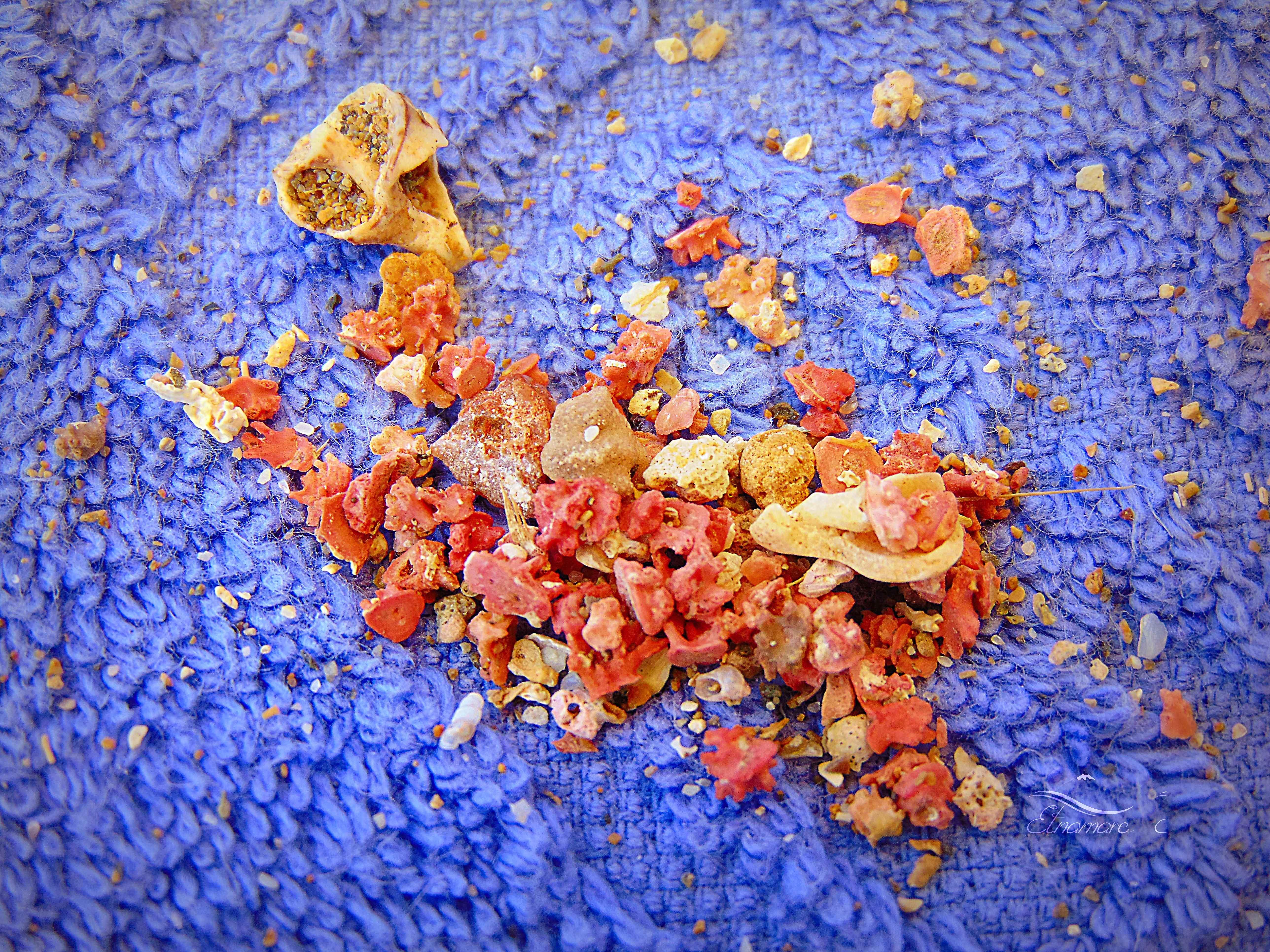 кораллы, собранные в районе Портопало (10 мин от САн Лоренцо)