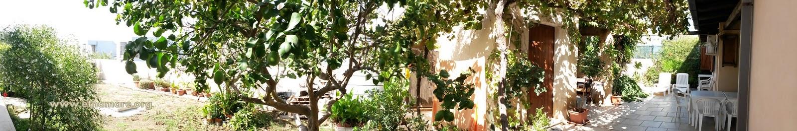 лимонным деревом, небольшим огородом.
